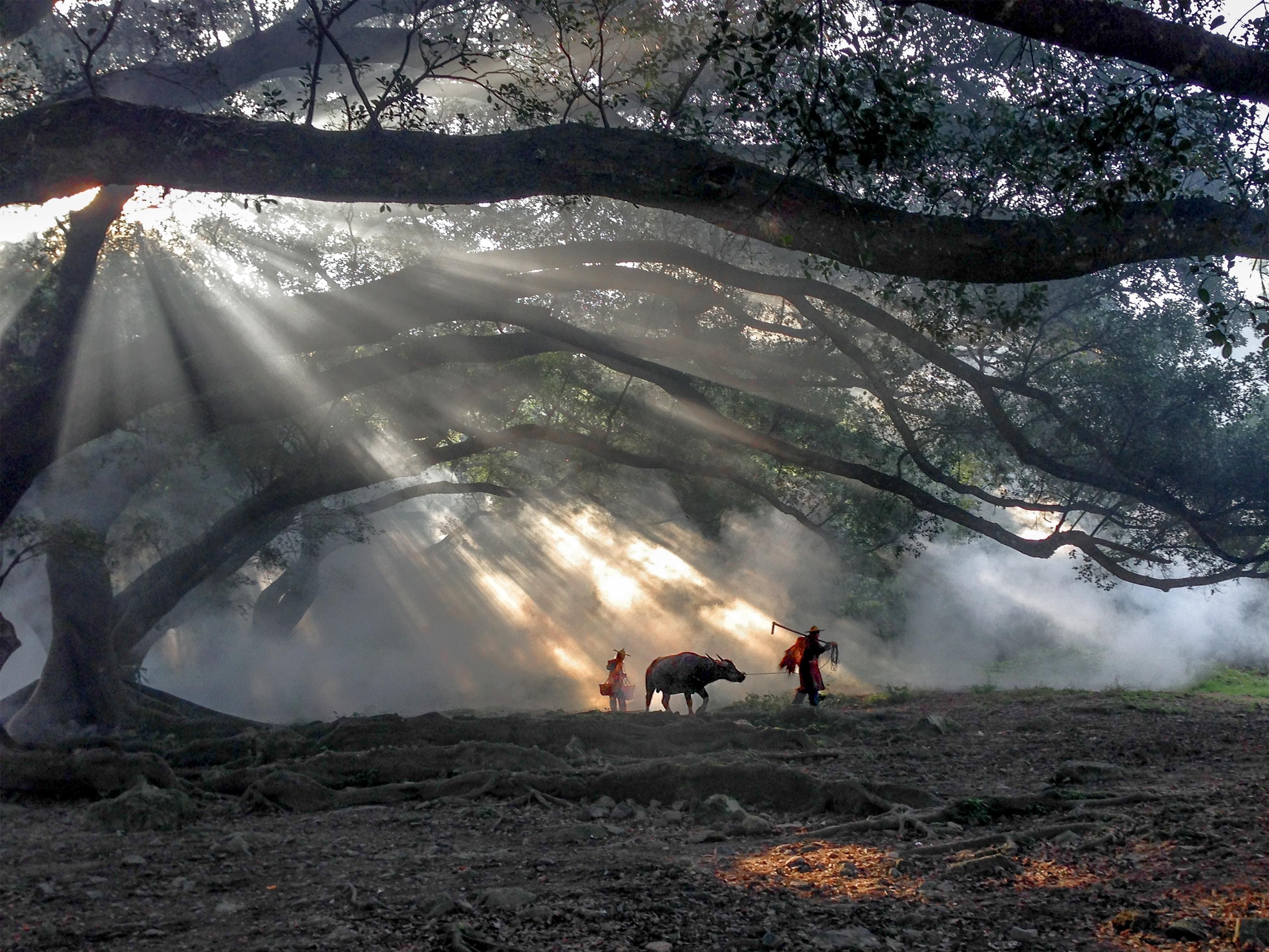 © Fugen Xiao (China)